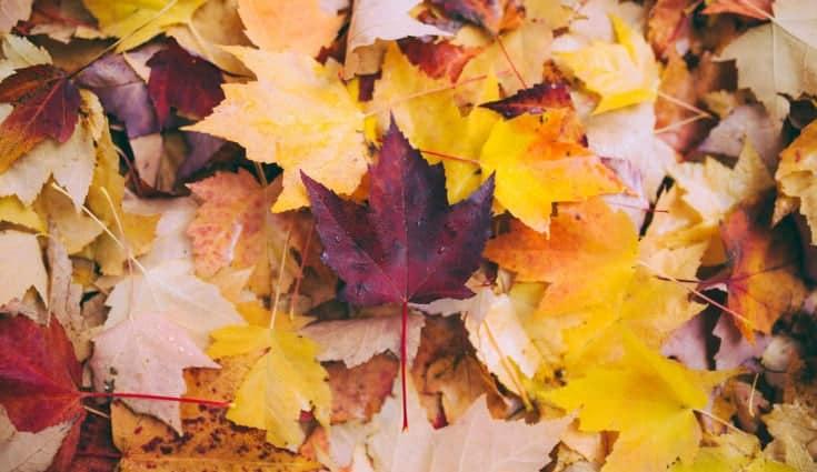 Wie schützen sich therapeuten vor Ansteckung im Herbst 2018